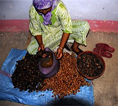 Argan nuts processed by woman