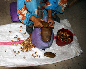 Woman processes Argan nuts