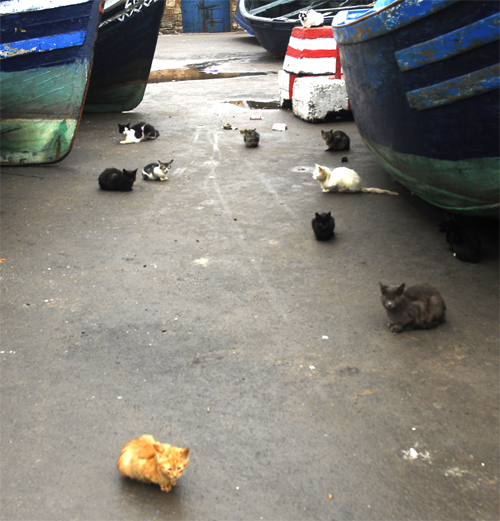 eleven cats in the port