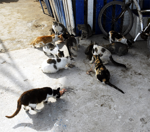 Cats in the port