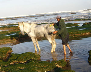 A man washes a horse at the beach of Frina