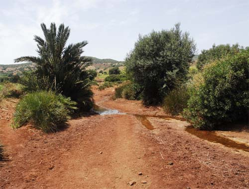 Djebel Hadid Oued with fresh water