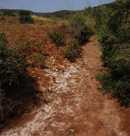 Salt in water stream  at the plateau of Djebel Hadid