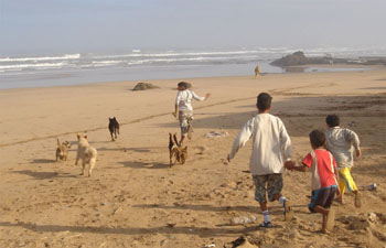 Dogs and children playing at the beach Plage Safi