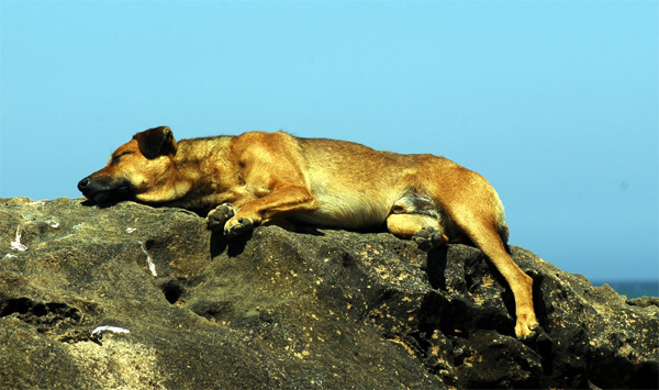 Dog sleeping on the rocks